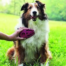 brushing-dog