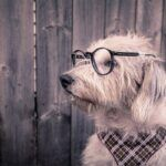 dog-with-glasses-on