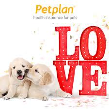 Love-petplan
